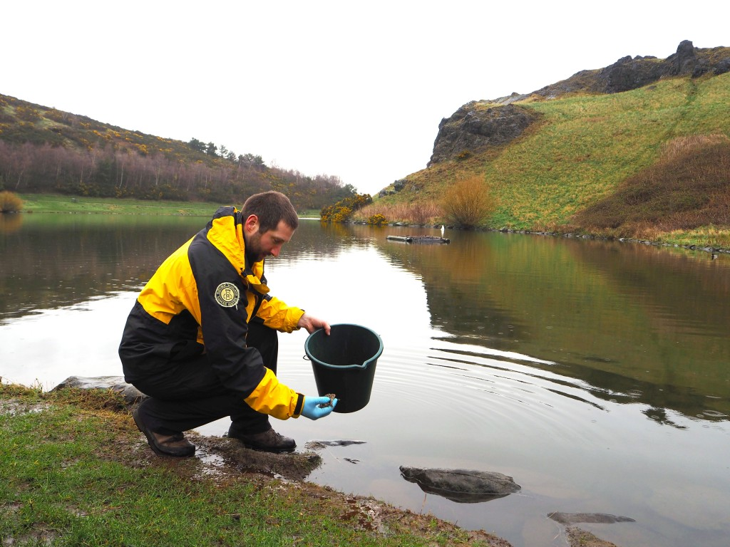 Ranger Robbie kneeling by the banks of Loch Dunsapie to release a toad he holds in his hand