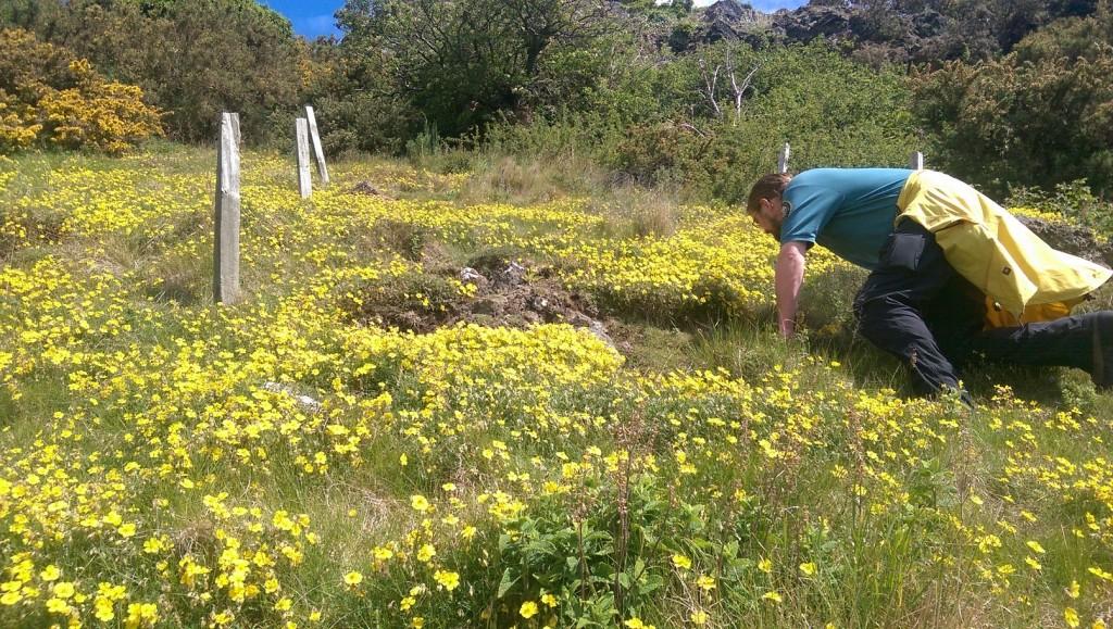 A ranger doing a wildflower survey