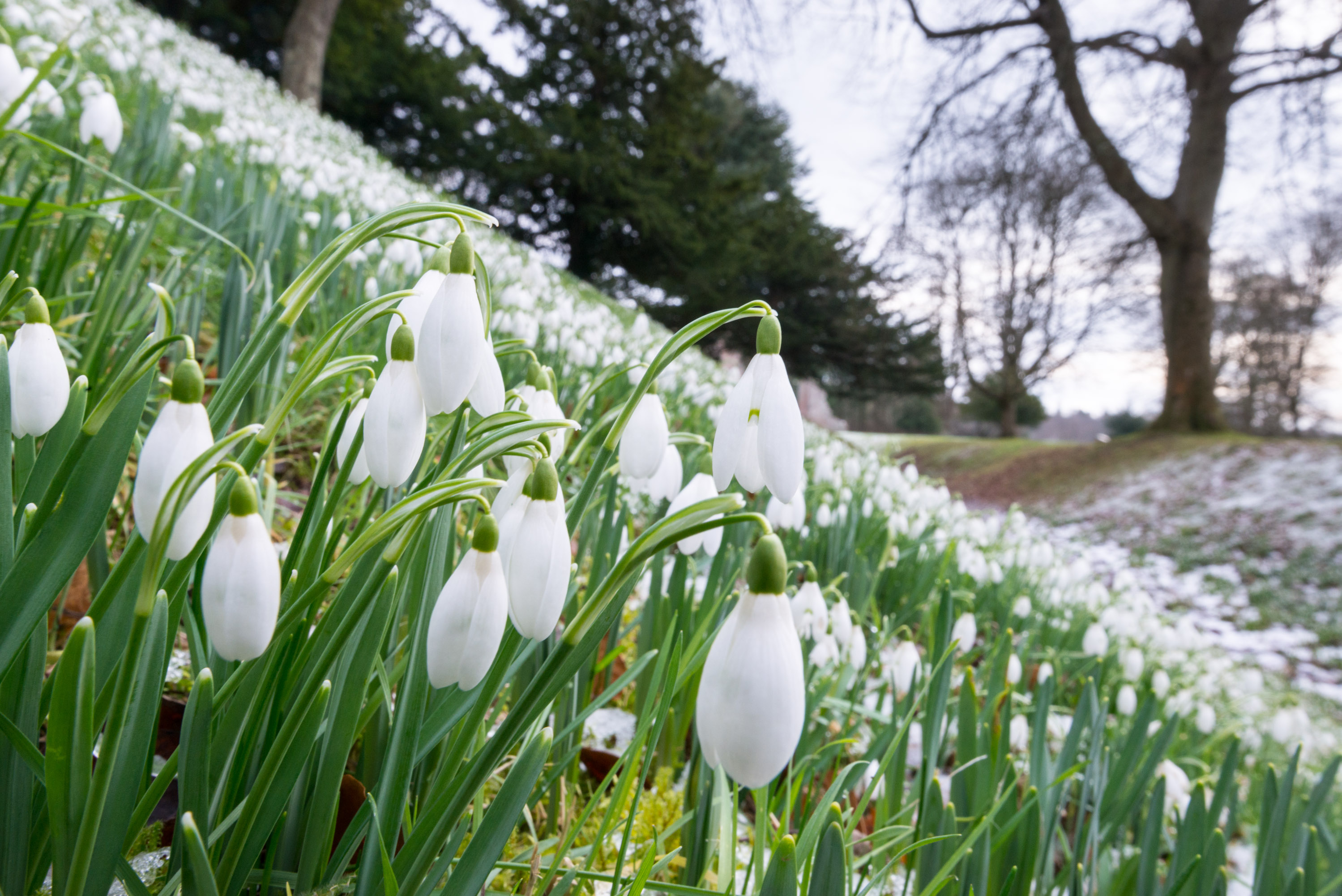 5 Places To Visit During The Snowdrop Festival Historic