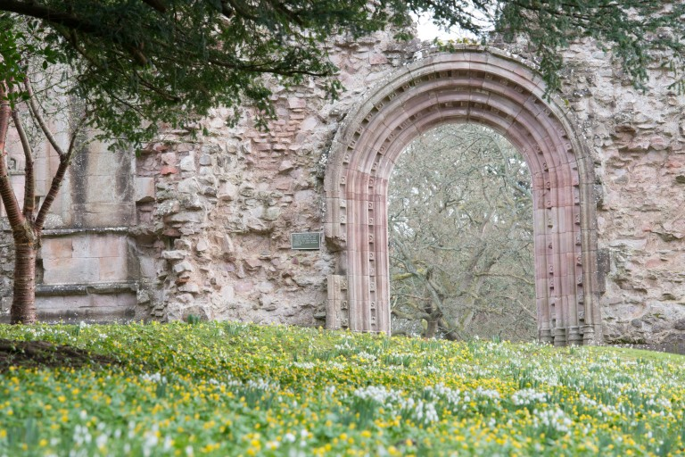 Snowdrops at Dryburgh Abbey