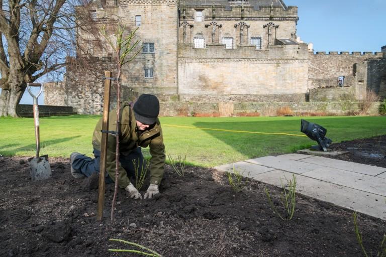 Holyrood Park gardener, Stuart Lerette, planting roses in the Queen Anne Gardens