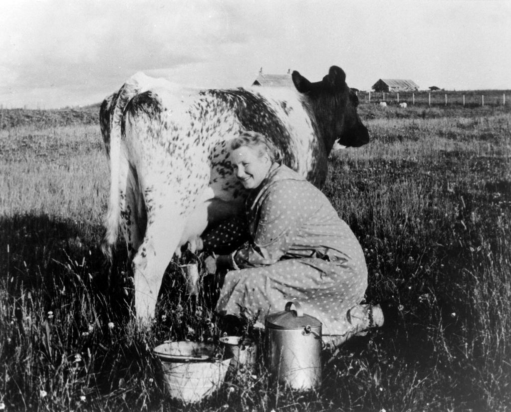 A black and white photograph of a woman milking a cow.