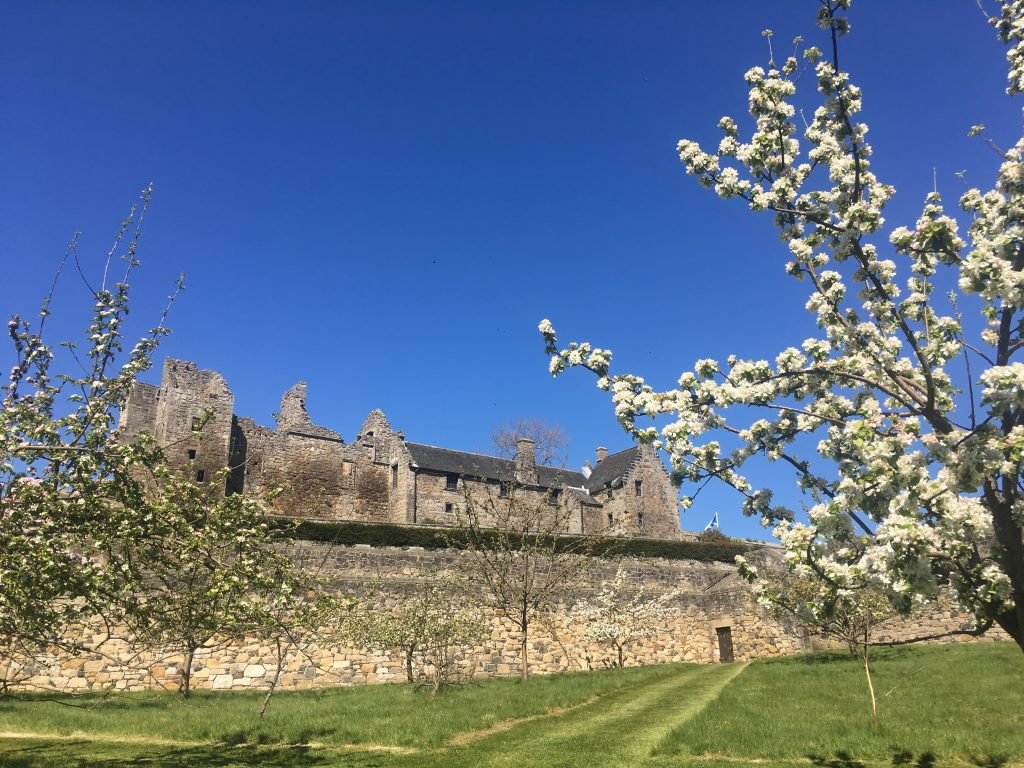 blue sky above grey stone building with outer wall and tree in foreground with white blossom