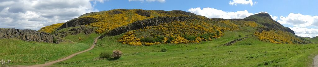 A photograph of a hill covered in yellow bushes on a sunny day