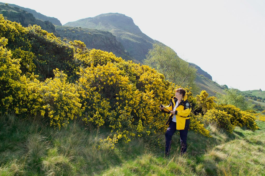 A photograph of a woman wearing a yellow jacket stood in front of yellow bushes.