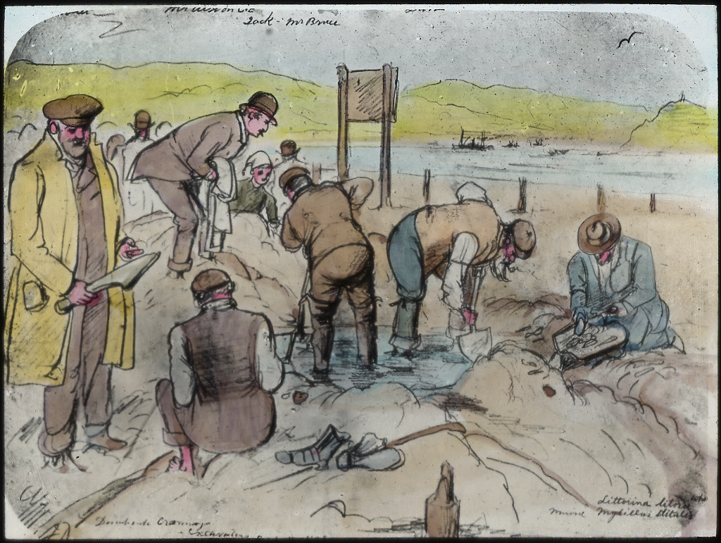 drawing showing the backs of several men digging at at an archaeology site