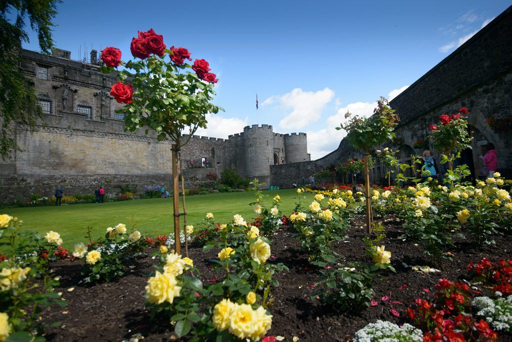 red and yellow roses with castle in the background