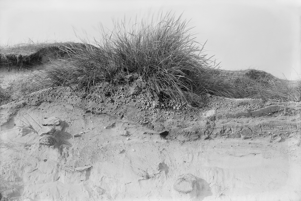 black and white image of a sand dune with tufty grass growing out the top