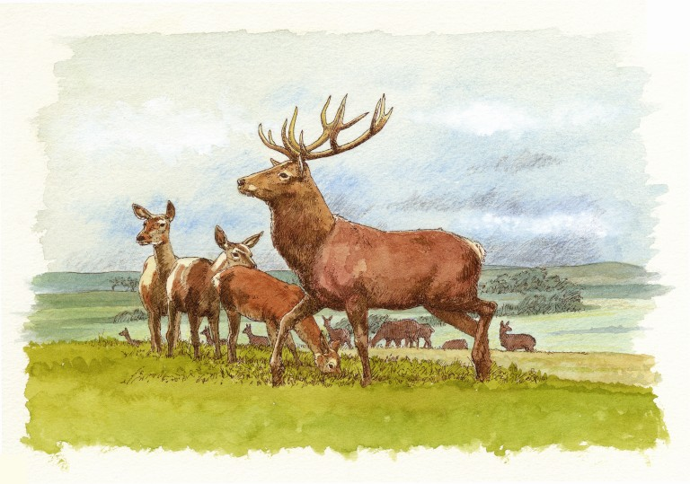 illustration of red deer at Skara Brae