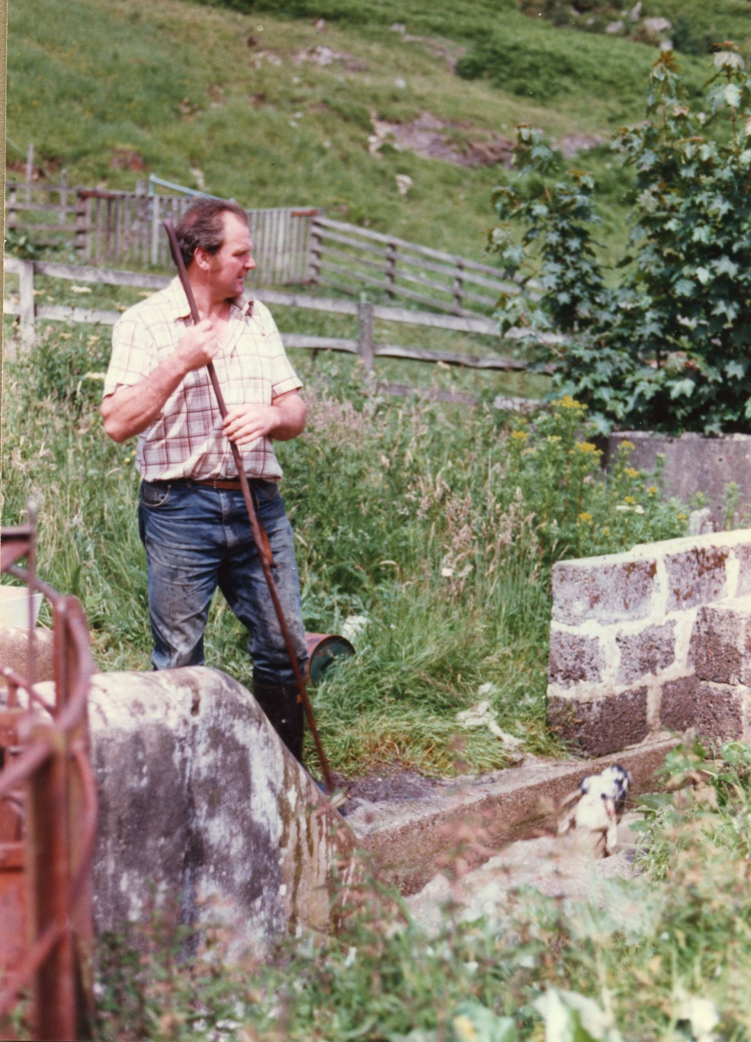 man in jeans and shirt sleeves holding a shepherds crook and looking off to the side