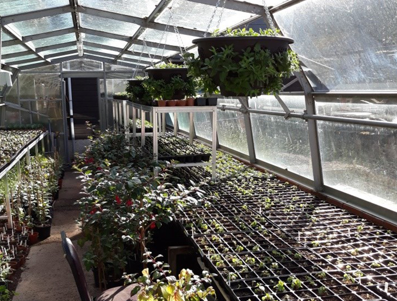 A jam-packed greenhouse