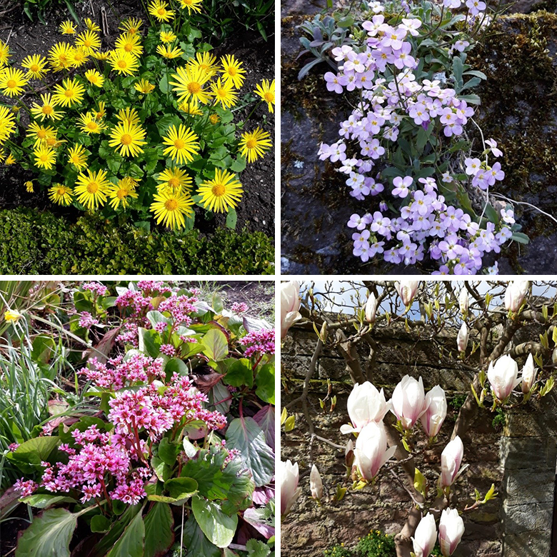 montage of photos showing flowers