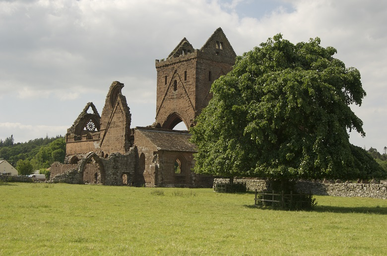 View of Sweetheart Abbey on a summer day. A large green tree in the foreground.