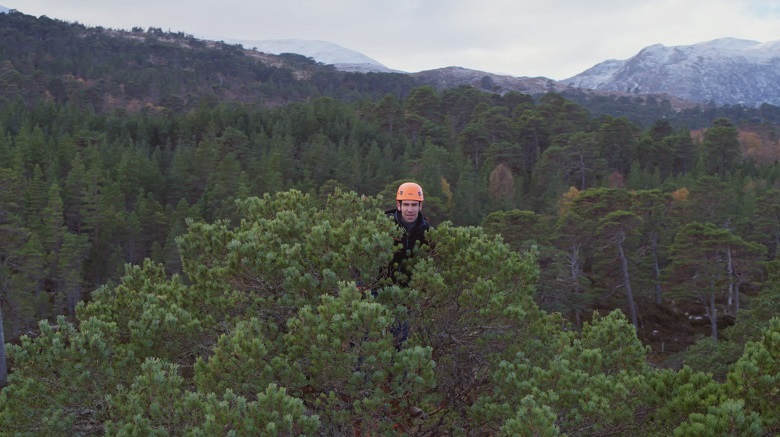 A man in a bright orange helmet emerges squirrel-like from the top of a Scots Pine tree. A forest and snow-capped mountains are in the background.