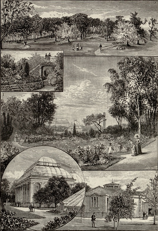 Archive engraving showing botanic gardens being enjoyed by Victorian ladies, gentlemen and children