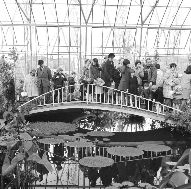 A group of people on a bridge traversing a pond filled with lily pads inside a large greenhouse