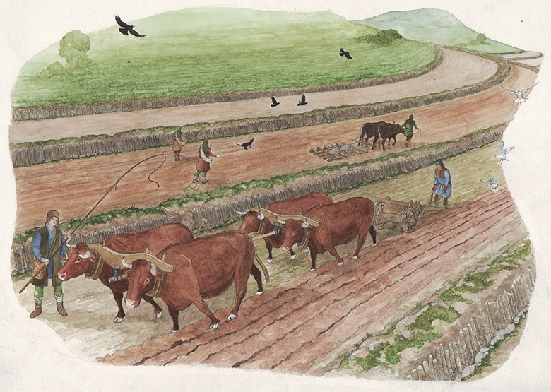 Illustration of medieval farmers at work using oxen and a wooden plough