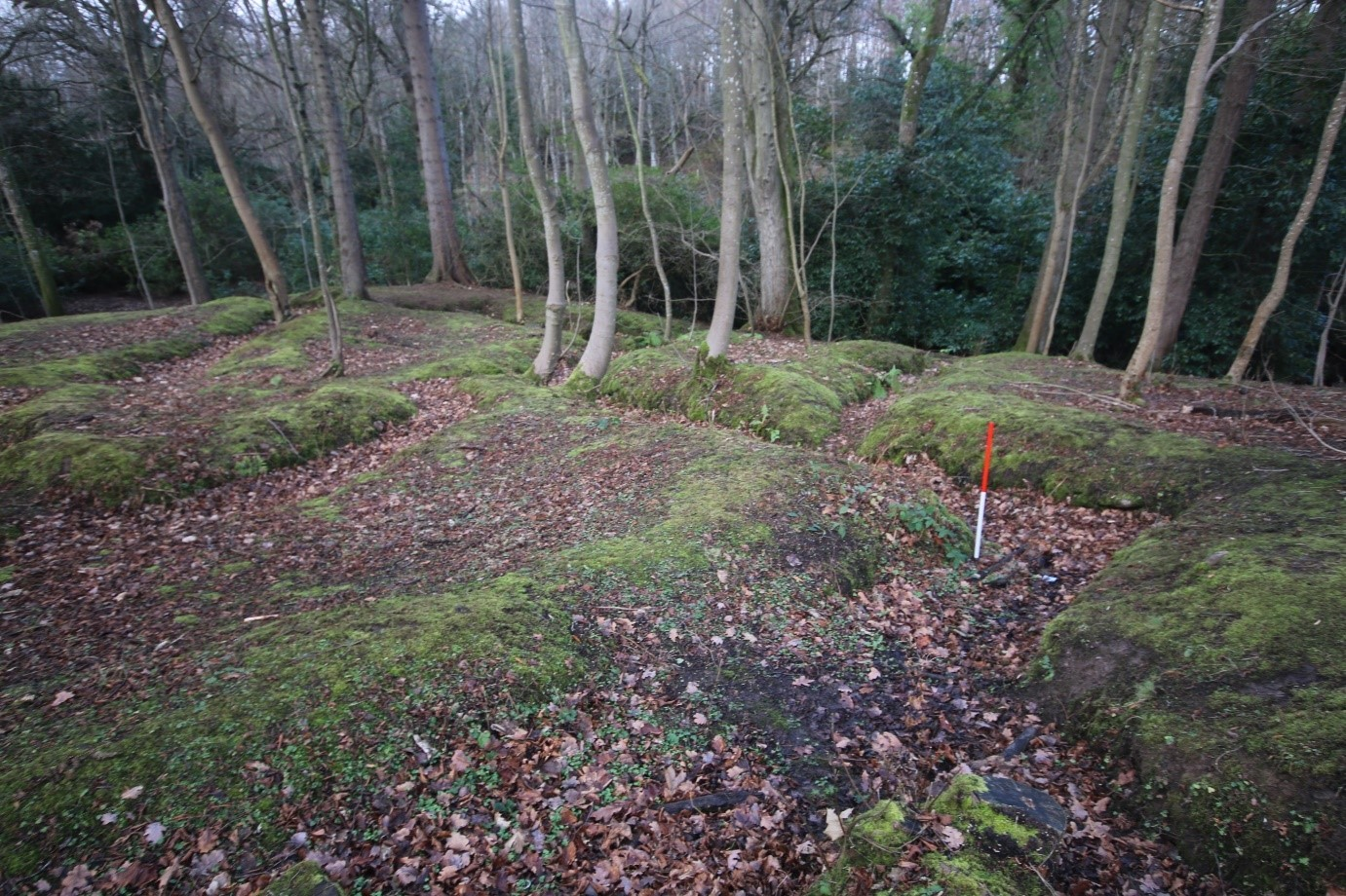 Remains of First World War training trenches in woodland near Edinburgh