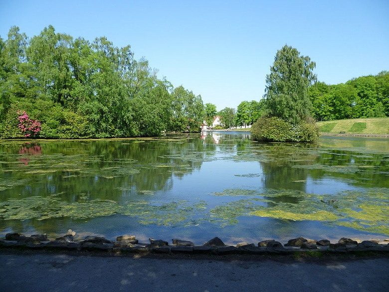 A pond covered in waterlilies at the centre of a lush green park