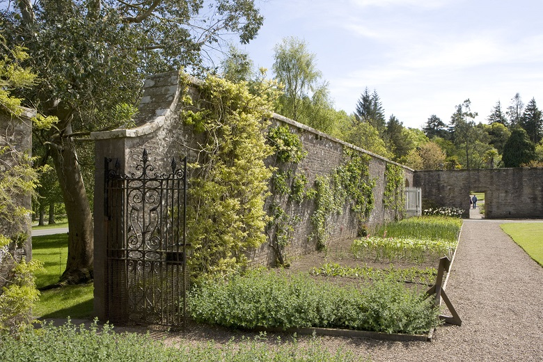 A historic walled garden, with plants climbing the wall, trees, and an iron gate