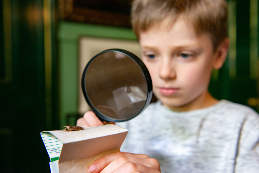 A boy holds a magnifying glass and looks at an insect on a piece of paper