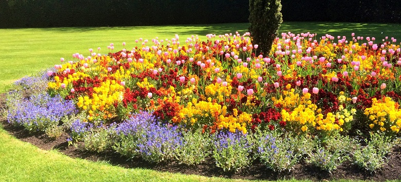A springtime flower bed featuring blue, red and yellow flowers