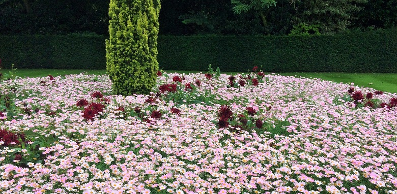 A summertime bed of pink flowers
