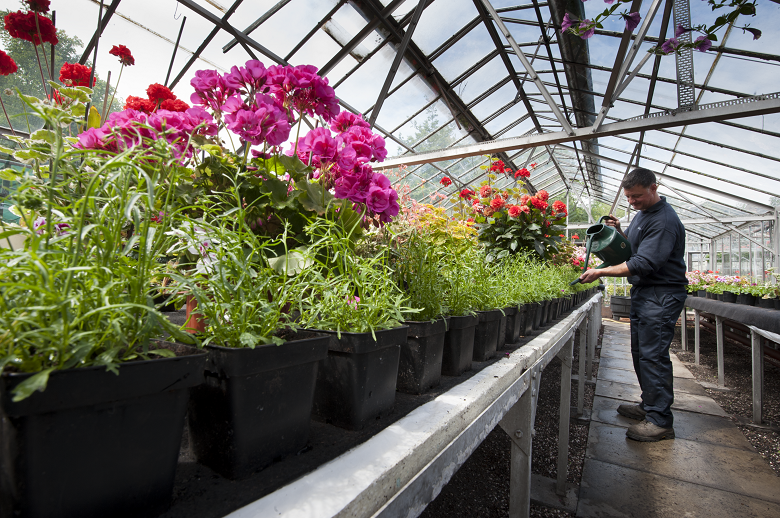 A gardener working in a greenhouse at Holyrood Palace