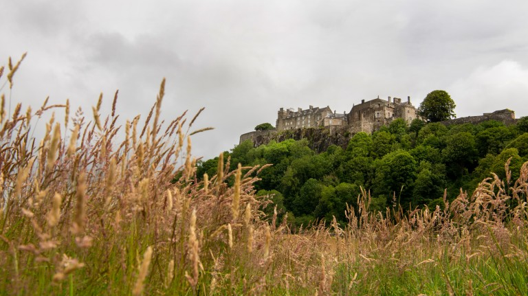 long grass waving in the breeze with a castle on a tree covered hill in the distance behind it