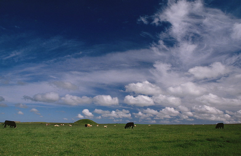 A filed of cows and a sky full of clouds above a chambered tomb