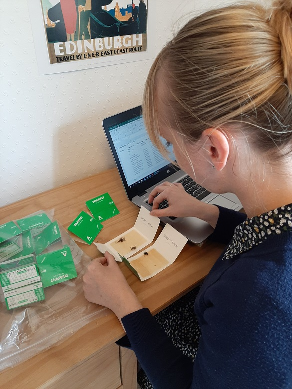 A conservator studying pest traps at a desk