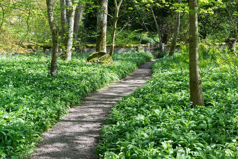 A path leading through trees and garlic plants