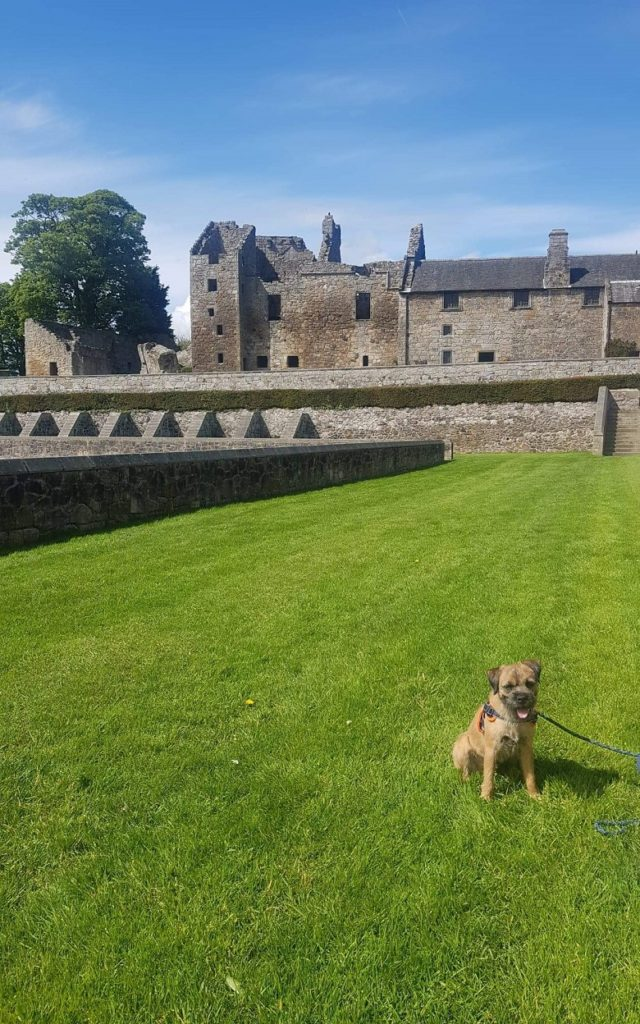 border terrier in front of Aberdour Castle