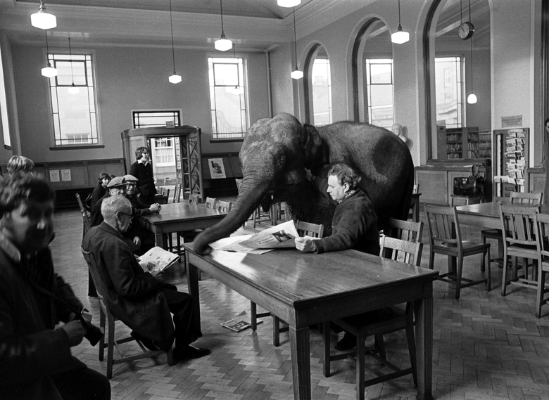 An elephant interrupts a table of readers in a library building
