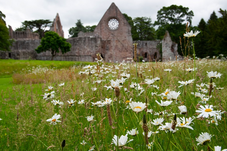 daisies in from of a ruined abbey